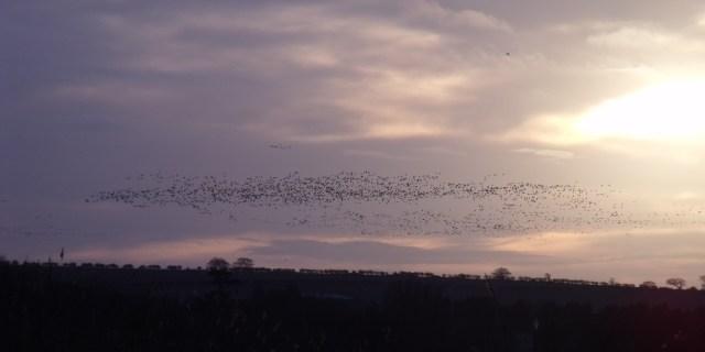 Dec 26 Burnham Beach a flock of birds at sunset